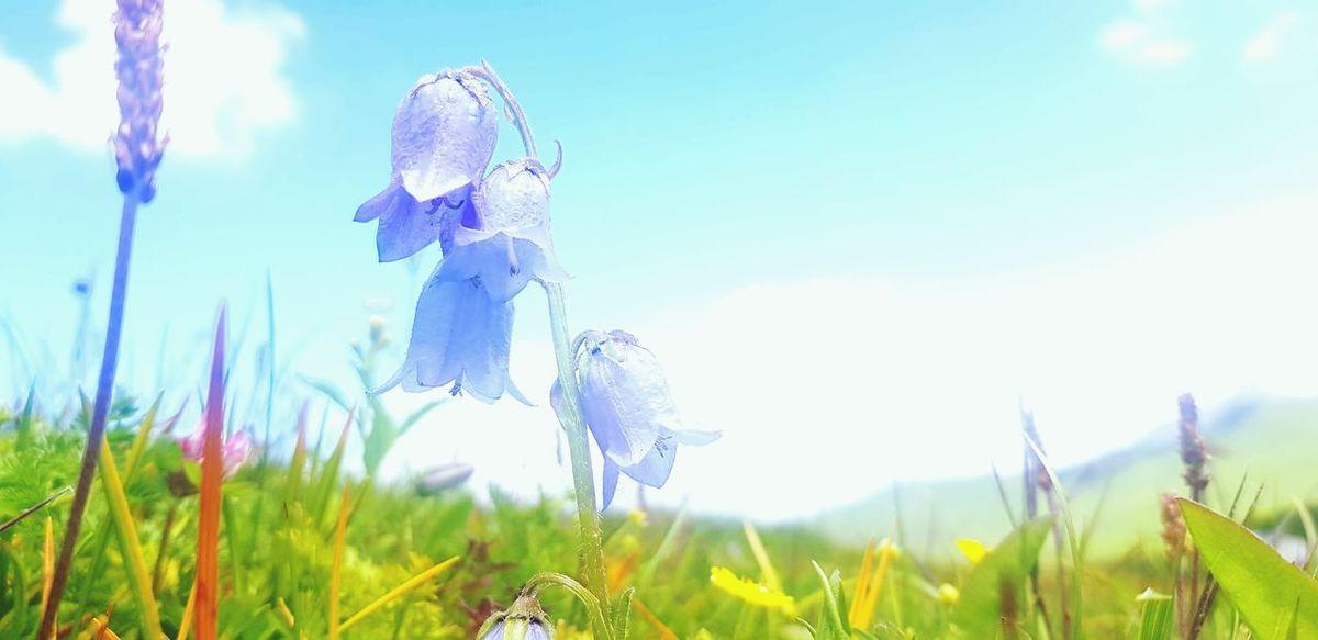 Rural Scene Summer Field Meadow Innovation Sunlight Flower Blue Sky Grass
