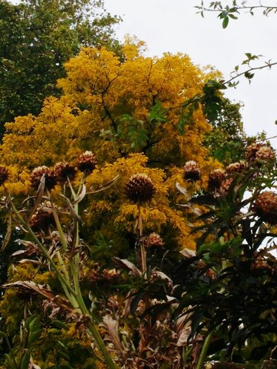 I took this nature shot in the most unexpected of places... At one of the busiest road junctions in the UK...Marble Arch roundabout in the centre of London! Beauty Where You Least Expect It Unexpected Nature Nature On Your Doorstep Autumn Colors Autumn Collection Autumn 2015 Seed Heads The World Needs More Yellow