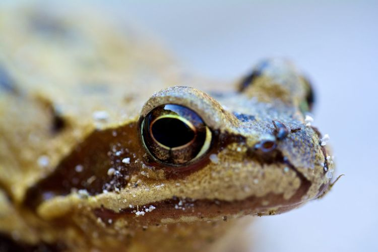 Treefrog Frog Animal Themes Animal Wildlife Animals In The Wild Close-up Nature No People One Animal Outdoors Treefrog