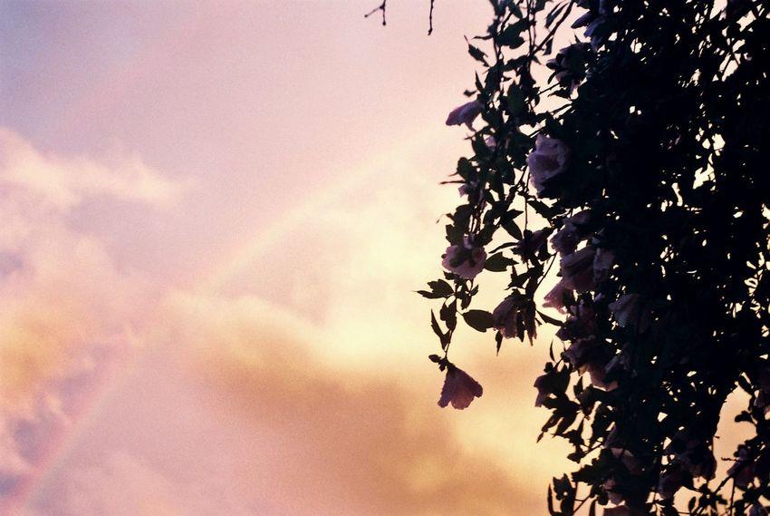 いろいろ恋しい。 First Eyeem Photo Film Photography Film Filmphoto Filmcamera Konica Konicaiib Rainbow Tree Flowers