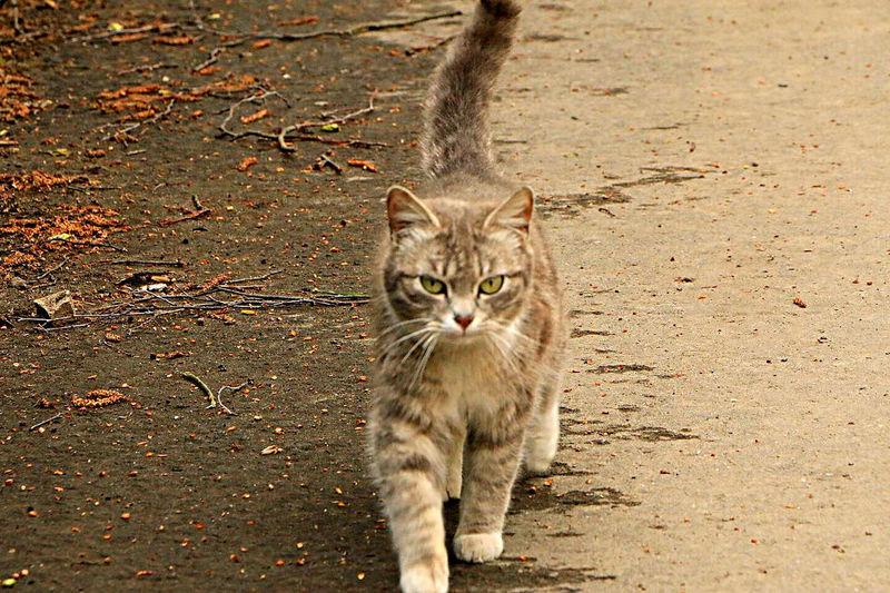 Portrait of cat walking outdoors