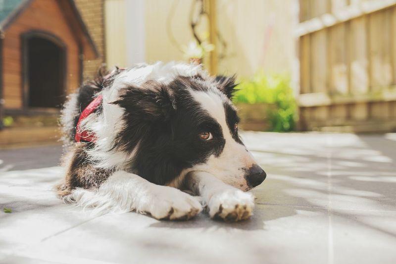 Dog One Animal Pets