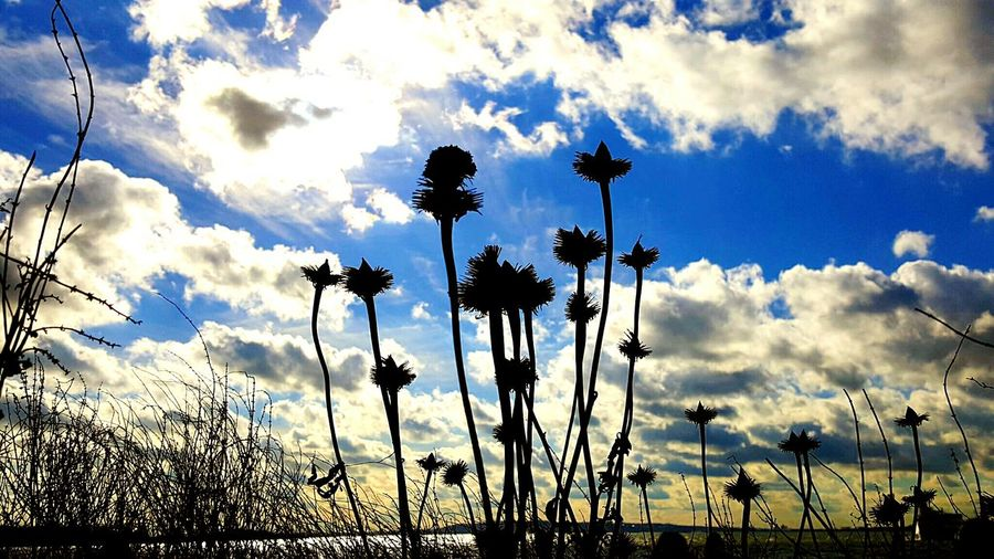 Low angle view of silhouette flowers against sky during sunset