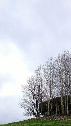 Trees Sky Sky And Clouds Spring Taking Photos Taking Photos Nature Landscape Türkiye Artvin