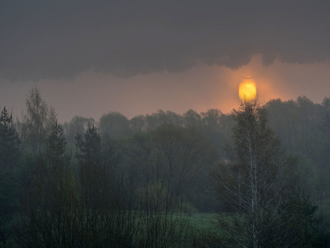 Russia, Oka river, fog, early morning Russia Beauty In Nature Cloud - Sky Environment Fog Foggy Foggy Morning Growth Idyllic Land Nature No People Non-urban Scene Oka River Orange Color Outdoors Plant Scenics - Nature Sky Sun Sunset Tranquil Scene Tranquility Tree