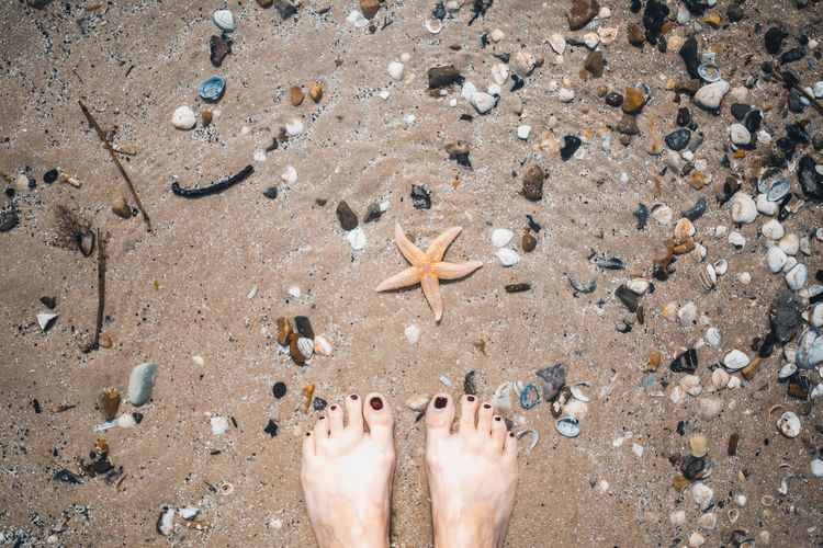 Low section of person standing on sand and looking at a starfish.