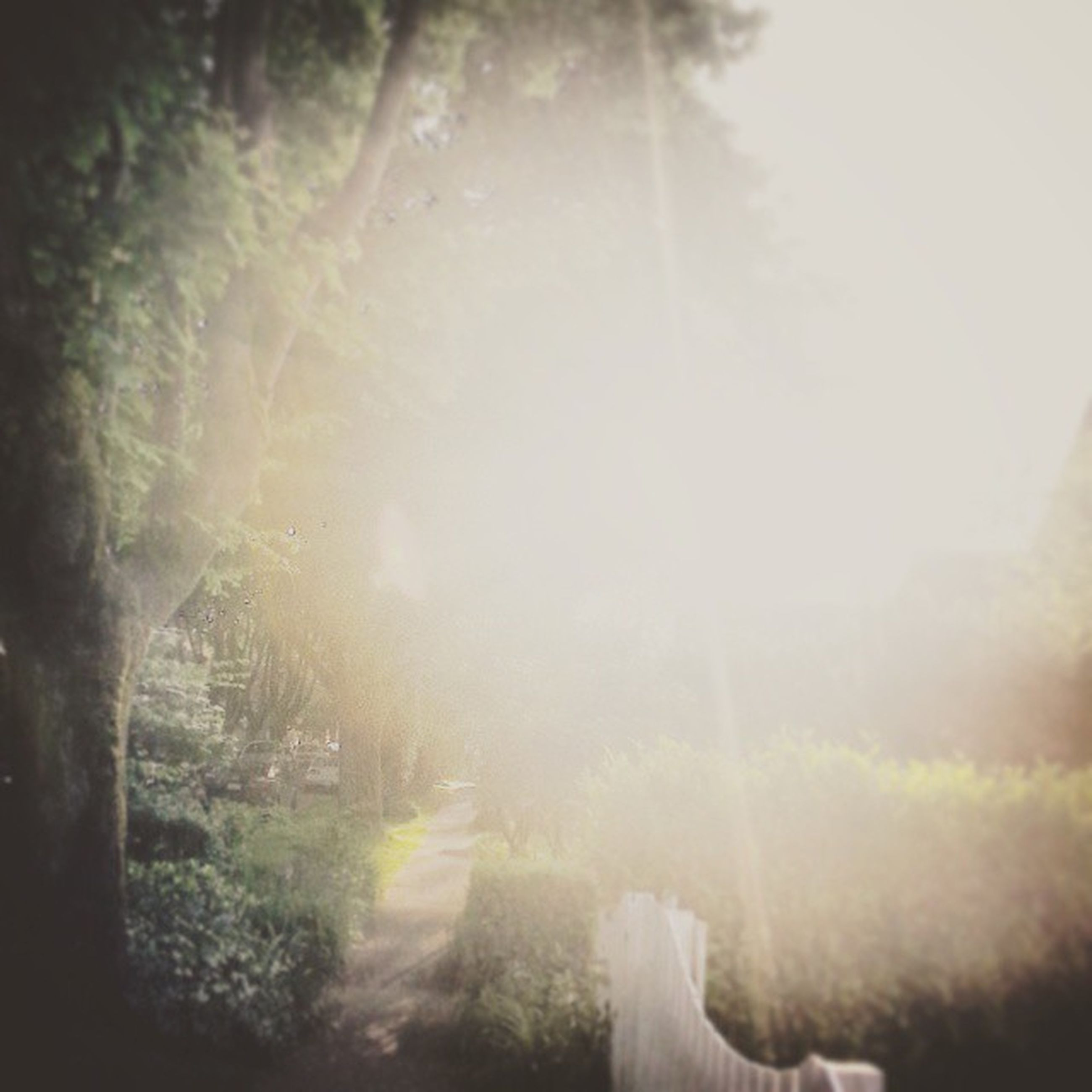 sunbeam, lens flare, sun, sunlight, fog, tree, nature, day, falling, outdoors, foggy, beauty in nature, tranquility, growth, auto post production filter, sunny, bright, the way forward