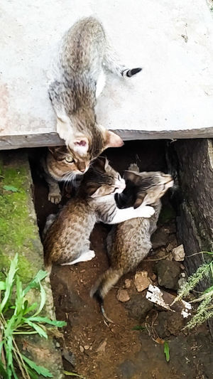 Family, protection, care, affection, togetherness, cozy, kittens, cats, mother and children, Grey, feline Pets, Cat In Heaven, Kitty Cat Outdoors Domestic Animals Close-up Beauty In Nature