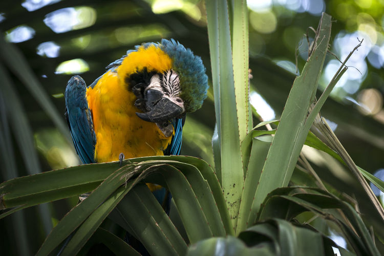 Close-up of a parrot perching on a plant