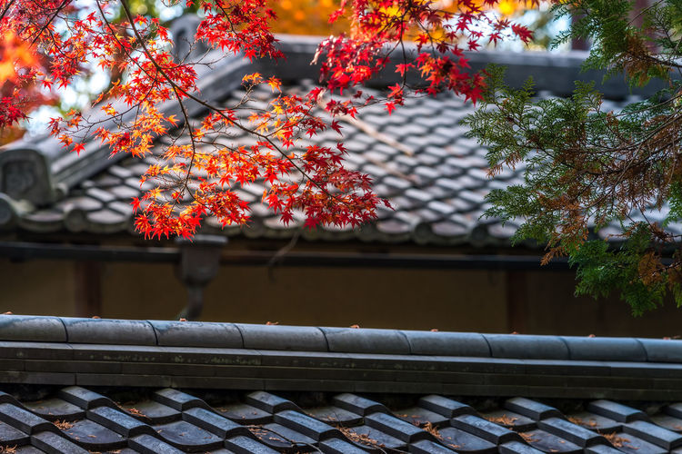 Low angle view of roof and tree in house