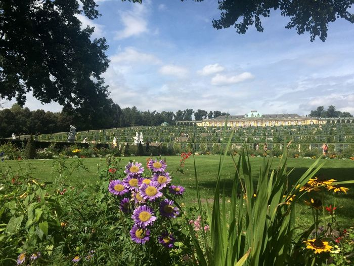 Sanssouci Palace garden view Beauty In Nature Berlin Blossom Cloud - Sky Clouds And Sky Flower Freshness Garden Garden Photography Germany Multi Colored Outdoors Palace Park - Man Made Space Potsdam Potsdam Park Sanssouci Sanssouci Park Potsdam Sanssoucipalace Scenics Tranquil Scene Tree