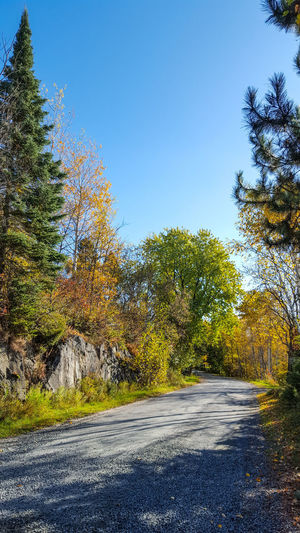 Tree Road Outdoors No People Clear Sky Tranquil Scene Backgrounds Multi Colored Fall Beauty Fall Is Here. The Week On EyeEm Oh Canada! Creativity Has No Limits Lines & Curves Art In Nature EyeEm New Here EyeEm Selects Half The World Away Just Passing Through Photography Art EyeEmNewHere Landscape Beauty In Nature Rural Scene Colour Everywhere