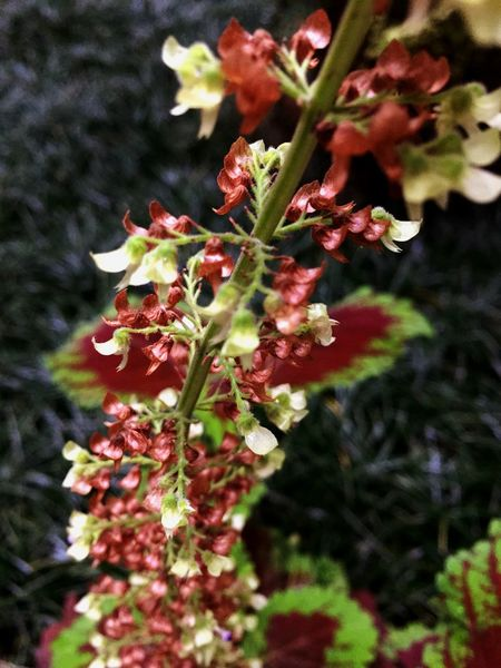 Flowers Plants Colorful Smart Simplicity