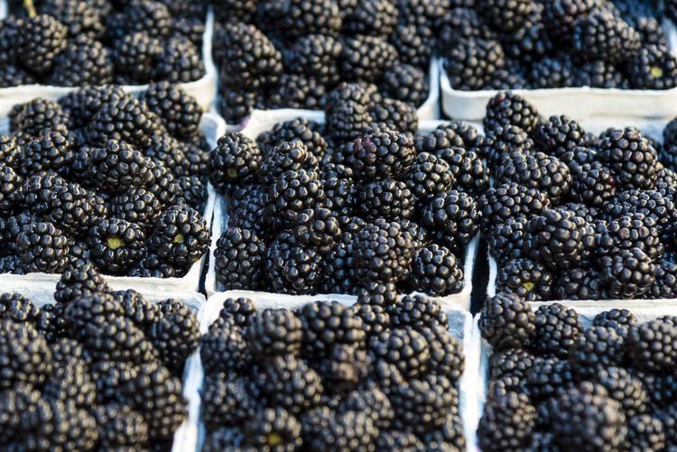Closeup of black blackberry. Black blackberry fruit in white boxes displayed at market. Bright Dessert Raw Abundance Backgrounds Berry Fruit Black Color Blackberry - Fruit Boxes Close-up Delicious Food Food And Drink For Sale Fresh Freshness Fruit Healthy Eating High Angle View Large Group Of Objects Market No People Ripe Sweet White