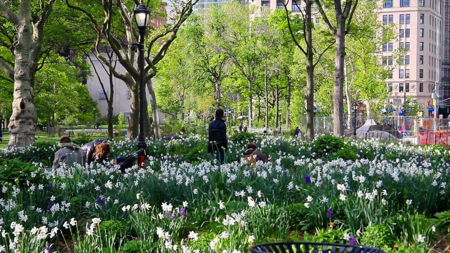 Flower Nature Dog Growth Day Outdoors Plant Tree Beauty In Nature Freshness Park People Pets Domestic Animals One Person Animal Themes Fragility Springtime New York City New York