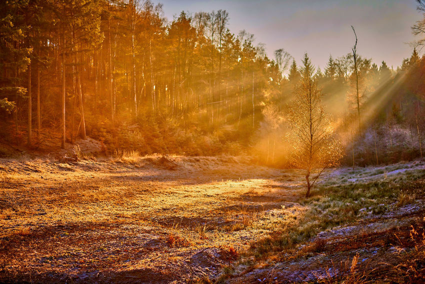 Shades Of Winter Dezember Winter Cold Day Forest Grass Landscape Nature No People Outdoors Sky Sunlight Tree Shades Of Winter