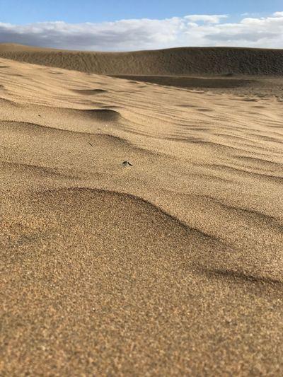 Maspalomas Sand Sand Dune Nature Landscape Desert Outdoors Beauty In Nature SPAIN Gran Canaria