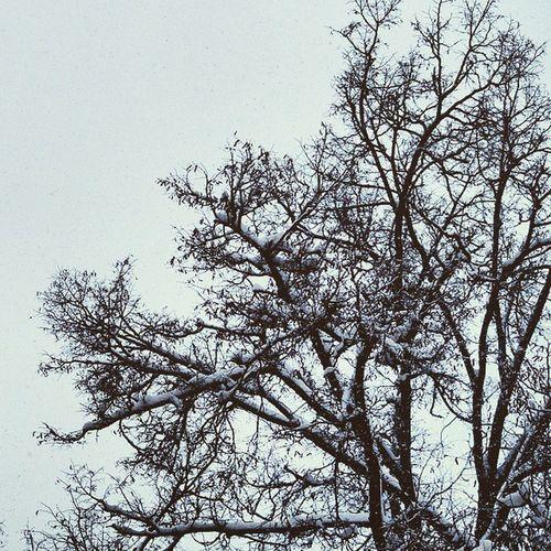 Beautiful Atmosphere and Nature . Trees at the Hofgarten garden covered in snow. near odeonsplatz. snowing, white winter. munich münchen bayarn Deutschland Germany. Taken by my SonyAlpha dslr A57. ثلج شتاء حديقة ساحة بافاريا ميونخ المانيا