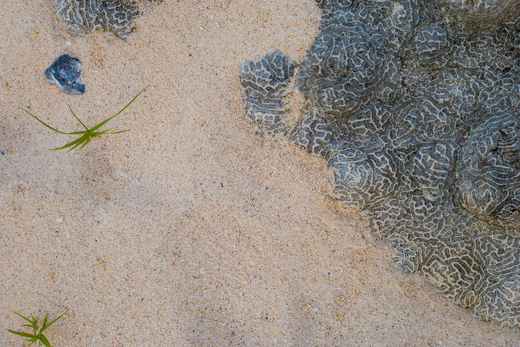 Cuba Beach Beauty In Nature Close-up Day Maria La Gorda Nature No People Outdoors Plant Sand