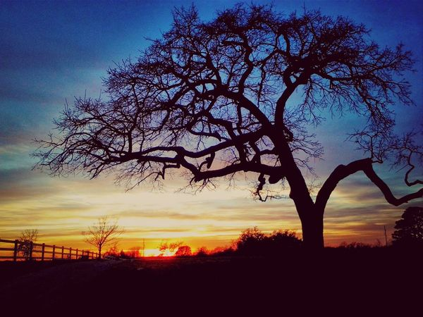Sunset Countryside Time To Say Goodbye My Favorite Tree
