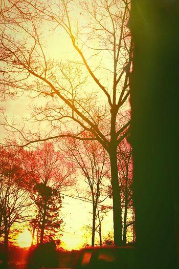 Sunshine Treegasm Eyemnaturelover Arkansas Sunrise