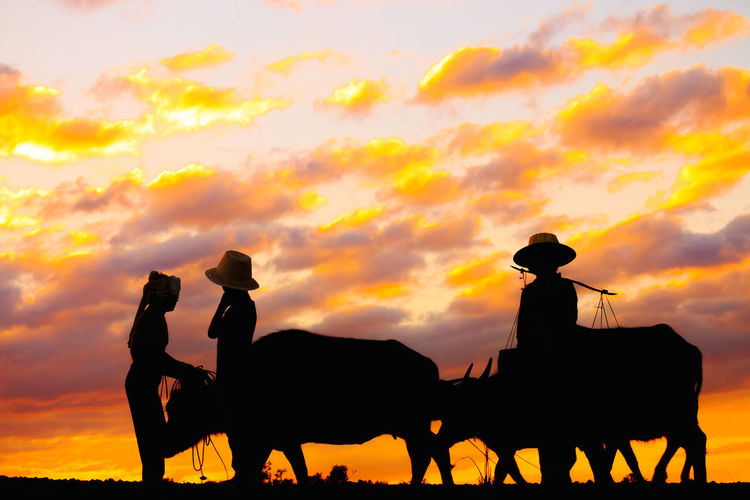 Animal Wildlife Beauty In Nature Cloud - Sky Cowboy Domestic Domestic Animals Group Of Animals Herbivorous Horse Livestock Mammal Men Nature Orange Color Outdoors Pets Real People Silhouette Sky Sunset Vertebrate