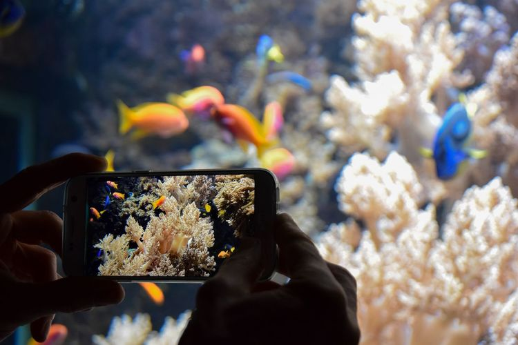 Cropped hands photographing fish tank with smart phone