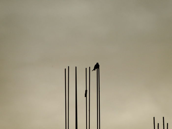 Low Angle View Of Silhouette Bird On Rod Against Sky
