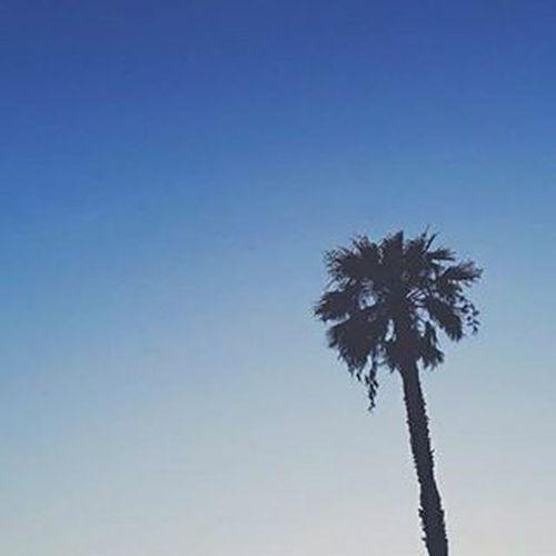 Ola friends 👍 Palmboom Todoespaniõl