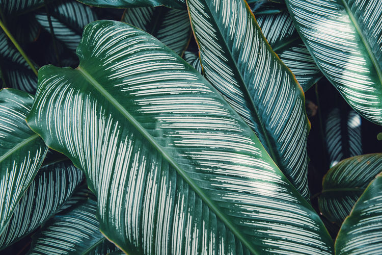 Martinique, French West Indies Green Plant Beauty In Nature Close-up Day French Island Full Frame Green Color Growth Island Leaf Leaves Natural Pattern Outdoors Palm Leaf Palm Tree Pattern Plant Plant Part Tree Tropical Tropical Climate Tropical Plants