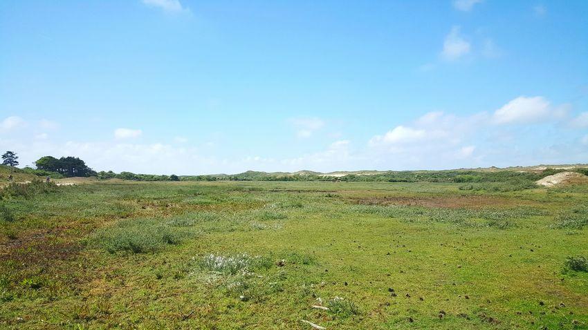Taking Photos Greenery Wildlife & Nature Nature Grassland Oranjezon Netherlands Zeeland  Blue Sky Enjoying The Sun