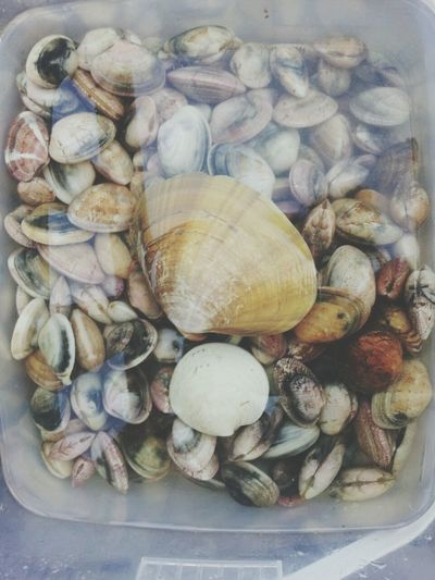 they are really real! And Im gonna eat them♥ Shells Sea Awesome Giant