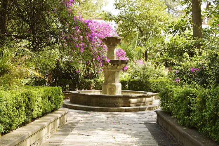 Un Rincón Escondido Antique Colony Town View Colonial Streetphotography Colonial Architecture Vintage Artistic Time Keeper Tiempo Tree Water Statue Sculpture Spraying Park - Man Made Space Fountain Garden Park Formal Garden Botanical