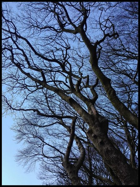 Smartshots Sunset Chorley Lovelancashire Tree Branch Low Angle View Beauty In Nature Nature Full Frame Growth Sky No People Outdoors