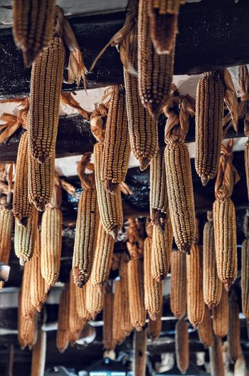 Low angle view of corns hanging from ceiling
