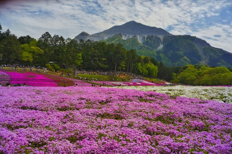 View of flowers in mountains against cloudy sky