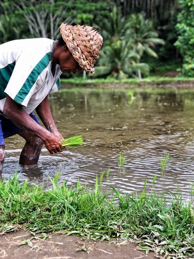 Ricefield Rice Field Worker Water Plant One Person Nature Growth Real People Day Adult Grass Farmer Green Color