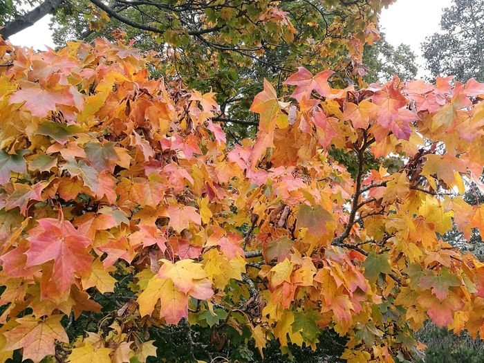 Autumn Multi Colored Beauty In Nature No People Leaf Branch Green Yellow Brown Orange