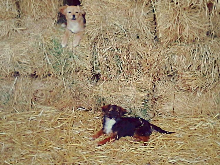 Two cute puppies I met at the national park Sidi Boughaba :3 Puppies Cuteness Nationalpark Puppy Puppy Love Puppies! Puppylove 😘😍🐶 PUPPIES!! Cute Cute Animals Cute Dog  Cutenessoverload Cuteness !! National Park SidiBoughaba Morocco