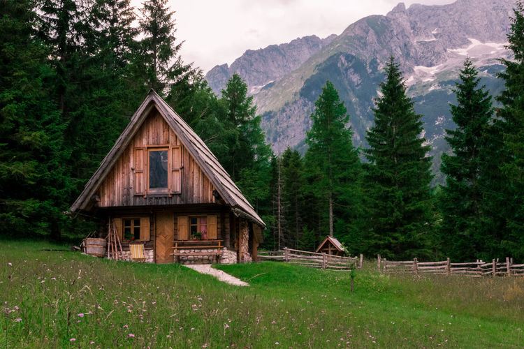 House by trees on mountain