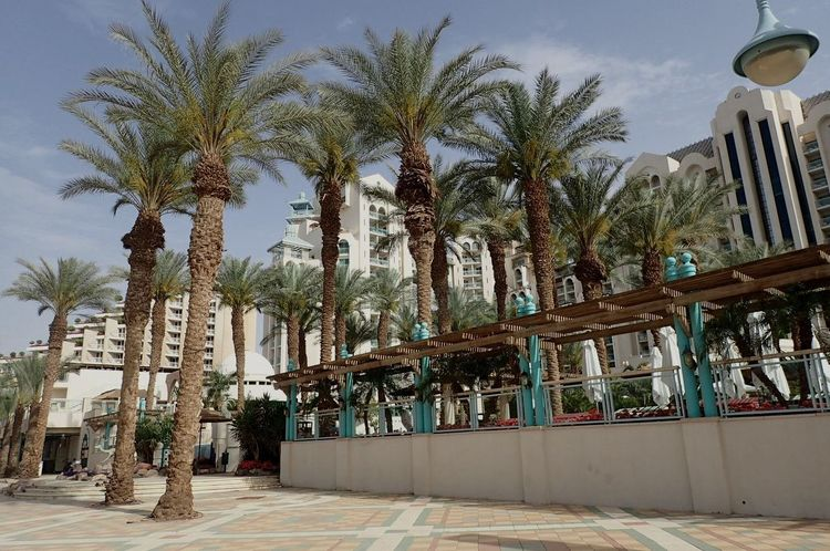 Hotels Area Palm Tree Israel Eilat Travel Destinations Architecture Building Exterior Outdoors No People Palm Tree