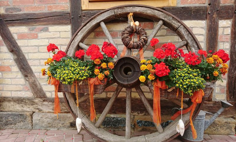 Geschmücktes Wagenrad vor dem Dorfcafe Alt Bleckenstedt Flower Day Outdoors Nature No People Plant Growth Beauty In Nature Architecture Freshness Flower Head Beliebte Fotos Sommergefühle From My Point Of View Beauty In Nature