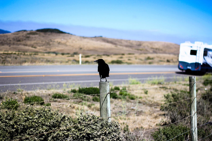 Caravan Park Animal Themes Animals In The Wild Beauty In Nature Bird Clear Sky Day Domestic Animals Grass Landscape Mammal Mountain Nature No People One Animal Outdoors Roadtrip2016 Scenics Sky Perspectives On Nature