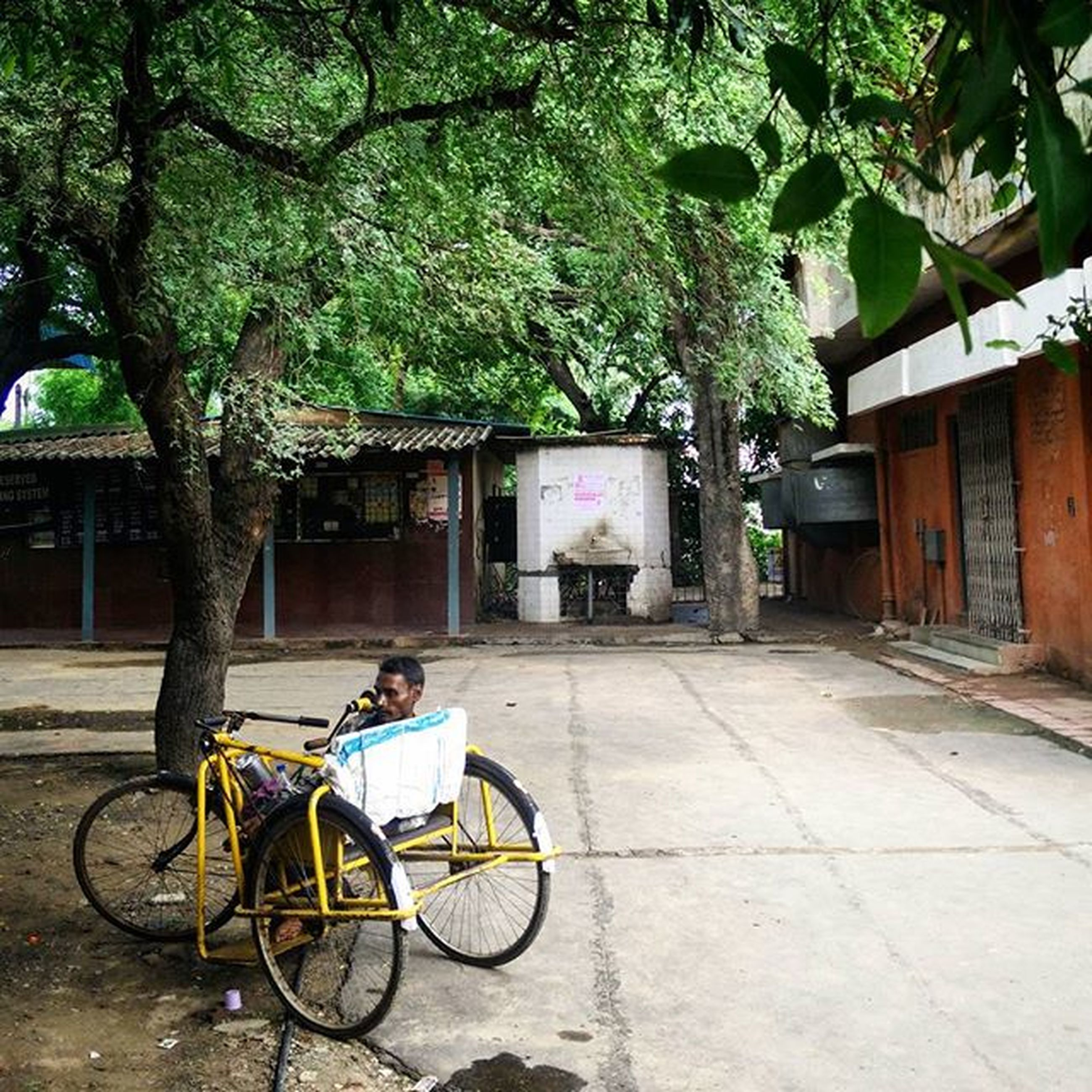 bicycle, transportation, mode of transport, land vehicle, parked, tree, stationary, parking, building exterior, architecture, built structure, street, house, sidewalk, footpath, day, cobblestone, outdoors, absence, growth