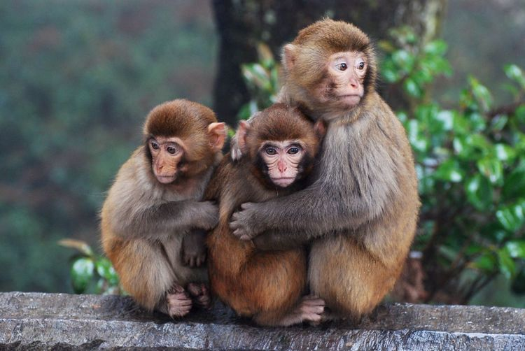 Monkey nature Outdoors Trees No People Green Nature Travel Destinations