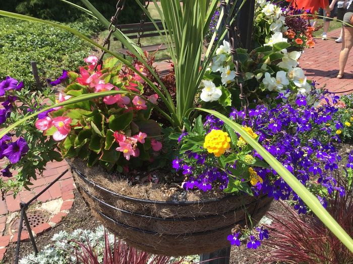 Hanging Flower Pot Potted Flowers Potted Flower Potted Plant Flowering Plant Flower Plant Growth Freshness Beauty In Nature Fragility Purple Front Or Back Yard Springtime Botany Garden Flower Head