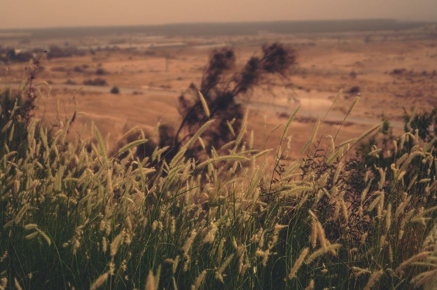 Judea Israel Nature Field Tranquil Scene Tranquility Landscape No People Scenics Growth Beauty In Nature Plant Agriculture Outdoors Focus On Foreground Rural Scene Day Grass Wheat Sky Close-up Perspectives On Nature EyeEmNewHere An Eye For Travel
