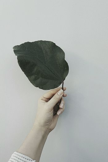 Human Body Part Human Hand Holding Leaves Green Color Textured  Leaf Branch Herbal Medicine