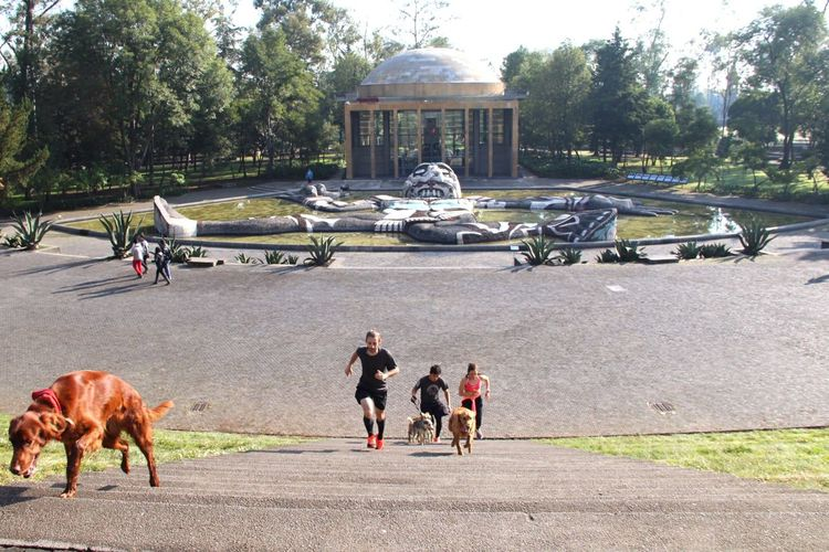 Runners, dogs and the fountain of Tlaloc. He was the god of rain from ancient aztecs. This is a fabulous tribute fountain in the main park of Mexico City. Tree Real People Domestic Animals Riding Outdoors Women One Animal Dog Day Mammal Pets People Adult Mexico City Cdmx Visiting My City