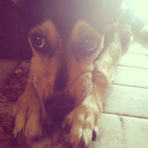 Kika vou te mordeeer <3 *-* Dog Cute Fofis @samppaiogabi